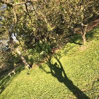 treeislyfe