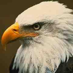 Eagle eagle stories