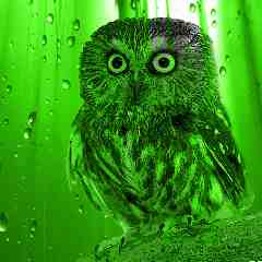 Green Owl poetry stories