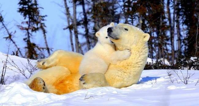 El señor oso stories